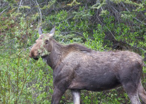 species_deer_img1