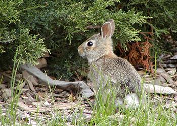 species_rabbit_img2